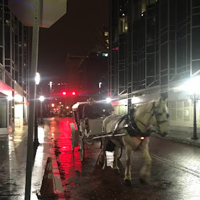 White horse drawn carriage  by Patrick Connolly - Animals Horses