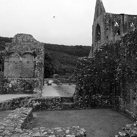Tintern Cloister by DJ Cockburn - Buildings & Architecture Decaying & Abandoned ( religious, tintern, britain, cistercian, remains, monmouthshire, building, grayscale, masonry, uk, christian, archaeology, black and white, mediaeval, architecture, tintern abbey, wye valley, wales, ancient, stone, monastery, ruins, monochrome, catholic, wall )