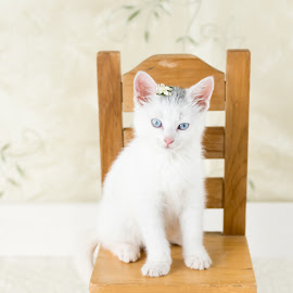 Sitting Pretty  by Sondra Sarra - Animals - Cats Kittens ( chair, kitten, cat, adorable, yellow, cute, pretty, flower )