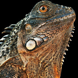 by Saefull Regina - Animals Reptiles