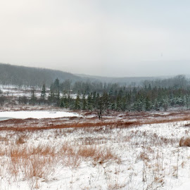 Canaan Valley Winter Pano by Jack Nevitt - Landscapes Weather ( winter, cold, west virginia, snow, trees, valley, canaan, panorama )
