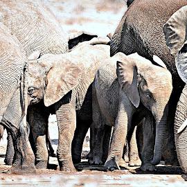 Shy Babies by Pieter J de Villiers - Animals Other