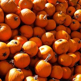 Pilin' Punkins! by Campbell McCubbin - Public Holidays Halloween ( orange, pumpkins, halloween, mountain, stack, pile )