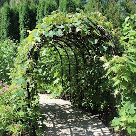 Terrace by Eryn Shepherd - Novices Only Flowers & Plants ( terrace, novice, grapes, green, plants )