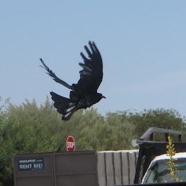 Fly away by Azurite Malachite - Novices Only Wildlife