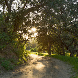 Canyon Trail by Kerry Perkins - Landscapes Forests ( forests, canyon, trails, landscapes, shadows )