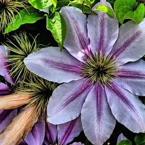 Flower by Ray Ebersole - Flowers Single Flower