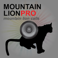Mountain Lion Calls UK