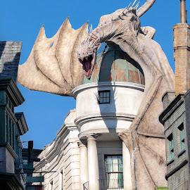 Dragon!! by Kathryn McConnell - City,  Street & Park  Amusement Parks ( florida, dragon, theme park, universal studios, orlando, tourism, harry potter )