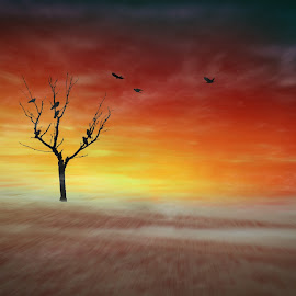 Silhouette 001 - Crows on the Lonely Desert Tree at Sunset by IP Maesstro - Digital Art Places ( desert, ip maesstro, hdr, tree, silhouette, sunset, sunrise, birds, crows, lonely, norway, lonely tree )