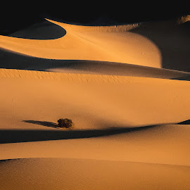 Death Valley Dunes_P1350427 by Ken Wade - Landscapes Deserts