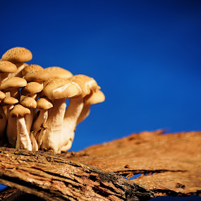 Together by Vineet Johri - Nature Up Close Mushrooms & Fungi ( vkumar, sky, fungi, tree, mushrrom, Mushroom )