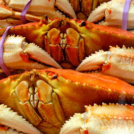 Dungeoness Crab by Dave Feldkamp - Food & Drink Cooking & Baking ( crab claws, dungeoness crabs, claws, crabs, crab,  )