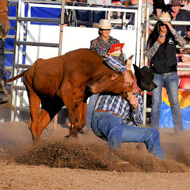 by RJ Photographics - Sports & Fitness Rodeo/Bull Riding