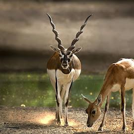 Q7 by Abdul Rehman - Animals Other Mammals (  )
