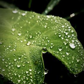 by Soumyadip Ghosh - Nature Up Close Natural Waterdrops (  )
