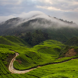 Beautiful Morning @ Tea Farm by Steven De Siow - Landscapes Mountains & Hills ( cameron highland, malaysia, scenery, landscape, tea farm )