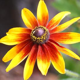 by Don Mann - Flowers Single Flower