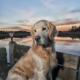 Marley by James Betts - Animals - Dogs Portraits ( dogs )