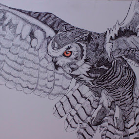 Great in Flight by Valerie Aebischer - Drawing All Drawing ( owl drawing, owl, great horned owl, owls, ink,  )