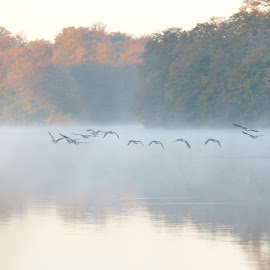 Fog by Robert Persson - Landscapes Weather ( water, skåne, fog, forest, birds )