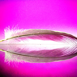 Feather by Janette Ho - Artistic Objects Other Objects (  )
