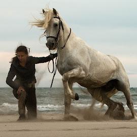 Kicking the sand by Helen Matten - Animals Horses ( stallion, magnificent, sand, rider, kicking, camargue, at, white, sea, france, beach )