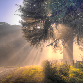 Tree Rays by Steven McGregor - Landscapes Forests