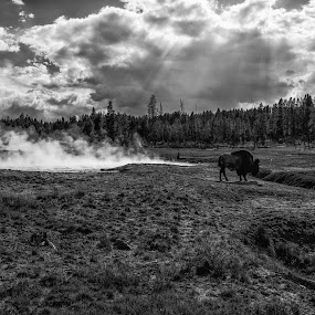 Buffalo Roaming by Zach Boudreaux - Black & White Landscapes ( clouds, buffalo, yellowstone, hot springs )