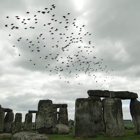 Stonehenge  by Samana Bukhari - Landscapes Travel