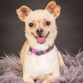 by Myra Brizendine Wilson - Animals - Dogs Portraits ( canine, foster brielle, foster dog, dogs, pet, pets, foster, gcspca, foster dog brielle, dog, brielle, greater charlotte spca,  )