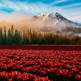 Mt Rainier by Jenny Hammer - Landscapes Mountains & Hills ( mountain, flowers, tulips, composite, sping, north west,  )