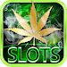 Lucky Weed – Free slots Icon