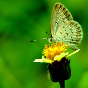 Butterfly and flower by Syarief Wiranegara - Nature Up Close Other Natural Objects