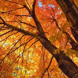 by Tony Lobato - Nature Up Close Trees & Bushes