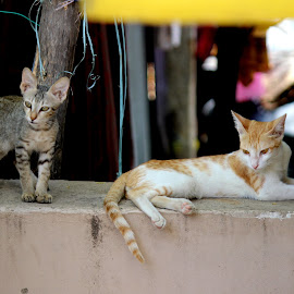 Keen Looks by Vivek Anandhan - Animals - Cats Kittens ( ears, cats, kitten, nature, animals,  )