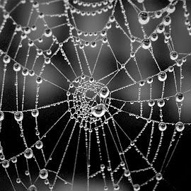 by RichandCheryl Shaffer - Nature Up Close Webs ( #spider #fog # beauty #water # art )