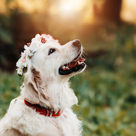 pure happiness by Krisztina Ajtai - Animals - Dogs Portraits ( retriever, puppy, autumn, dog, cute, photography, pet, flower,  )
