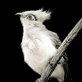 by Judy Rosanno - Black & White Animals ( san antonio zoo,  )