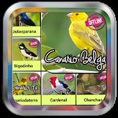 Free Download canto de canário da terra offline APK for Samsung