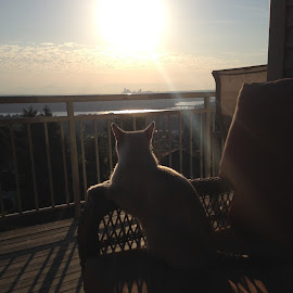 Cat Dreaming by Gary Nakamaru - Animals - Cats Portraits ( cat, sky, dream, sunset, horizon )