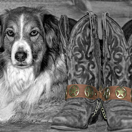 Dog 'n Boots by Twin Wranglers Baker - Animals - Dogs Portraits