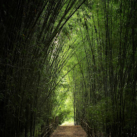 Bamboo covered road by Navajit Prodhani - Landscapes Forests