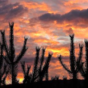 Faux Desert Sunrise by Campbell McCubbin - Landscapes Sunsets & Sunrises ( red, sunrise, pine, dawn, clouds, desert )