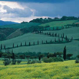 Tuscan cypress zed by Gale Perry - Landscapes Prairies, Meadows & Fields ( zed, hills, tusacany, cypress trees, great clouds, after storm, yellow rape )