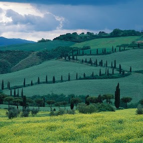 Tuscan cypress zed by Gale Perry - Landscapes Prairies, Meadows & Fields ( zed, hills, tusacany, cypress trees, great clouds, after storm, yellow rape,  )