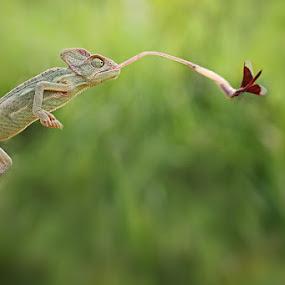 I got You by Shikhei Goh III - Animals Reptiles