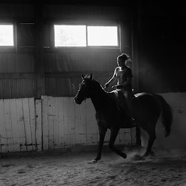 Barn Sun Beams 1 by Monte Arnold - Animals Horses ( rider, black and white, beautiful, dust, horse, run, shadows,  )