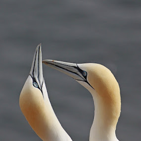 In love by Blaz Crepinsek - Animals Birds ( , Love is in the Air, Challenge, photo )