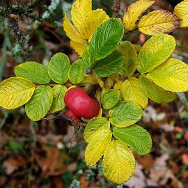 by Jana Kubínová - Nature Up Close Other plants